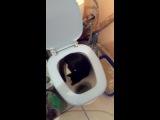 мой кот ходит в унитаз :))))